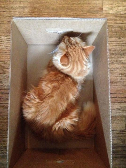 Thomas in a Box